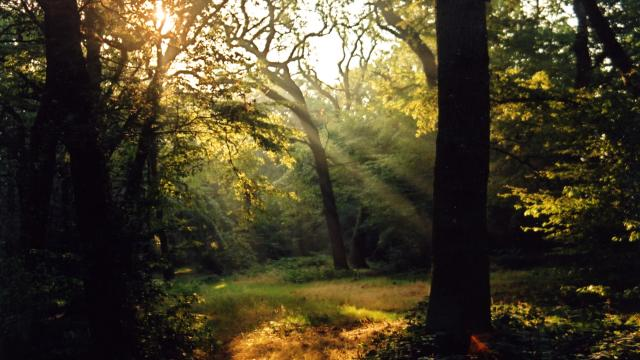 Epping Forest London
