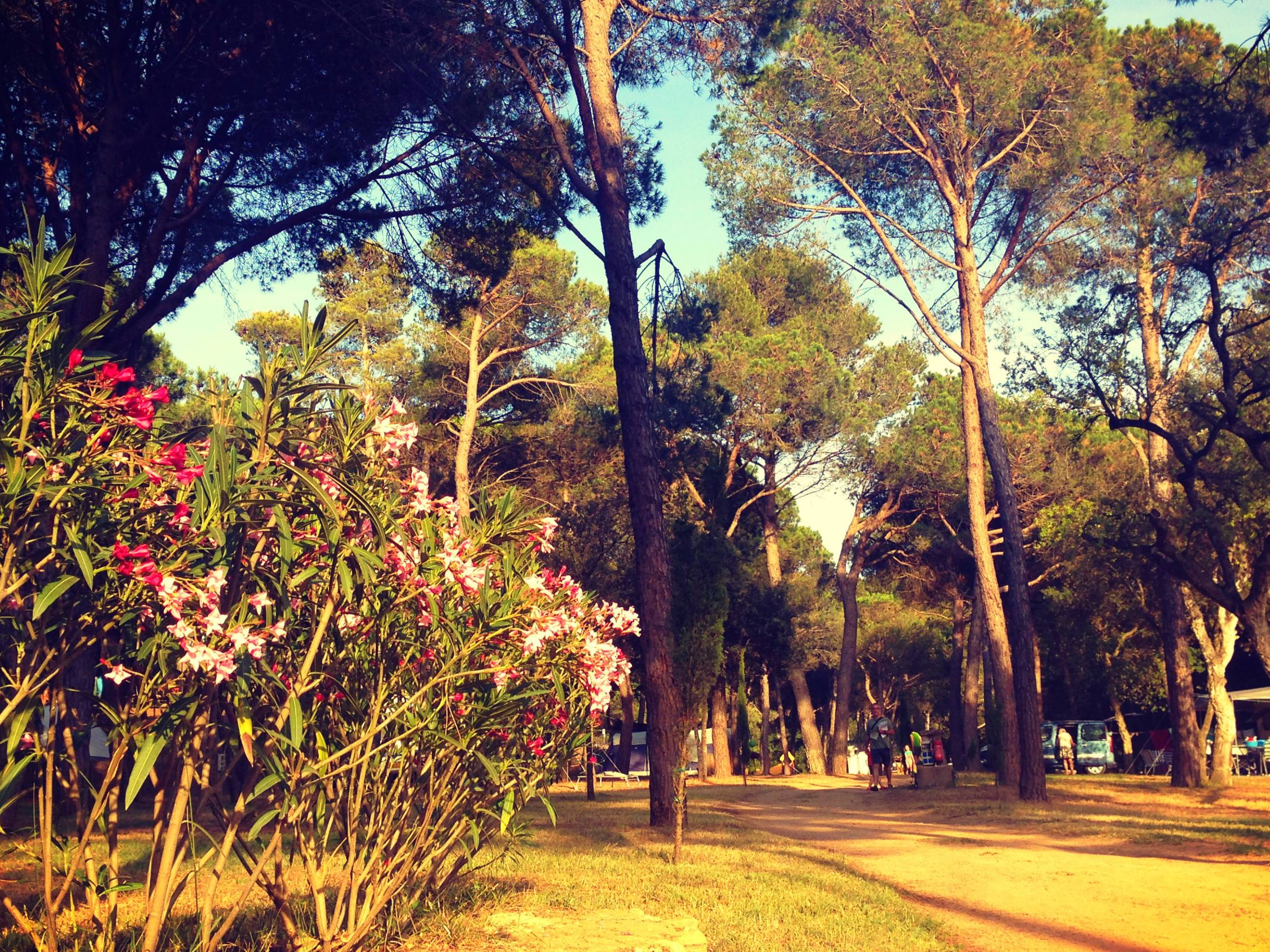 Begur Campsite - The Best Campsite on the Costa Brava (Bungalows, Tents and Tourers)