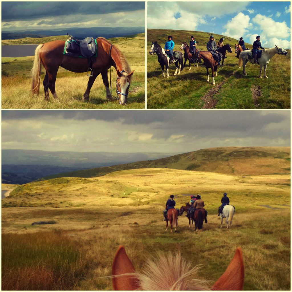 Learn to ride horse riding holidays in Wales, UK - Freerein