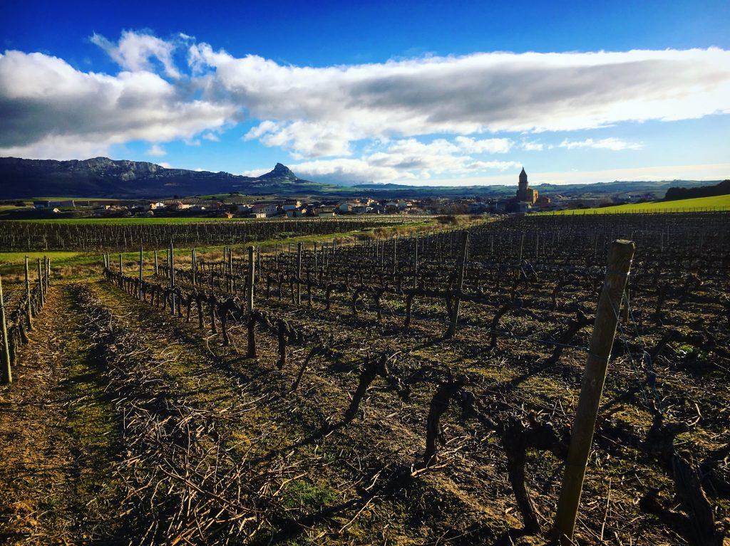 Vineyards in Rioja Alavesa, Basque Country Spain