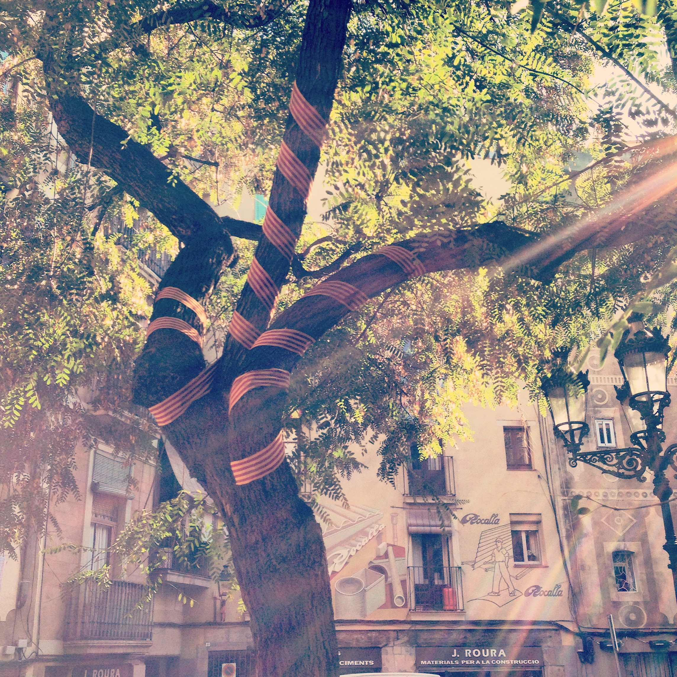 Catalan flag wrapped around a tree in the Born barrio, Barcelona