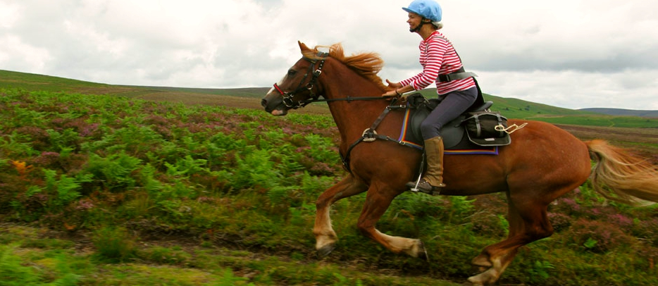 horse-riding-holidays-sg-radnor-farms-ft