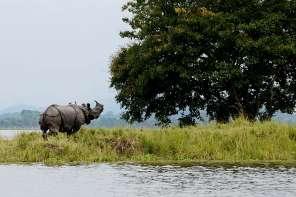 Kaziranga_National_Park India