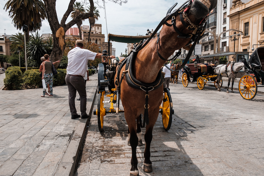 Seville horse and carts