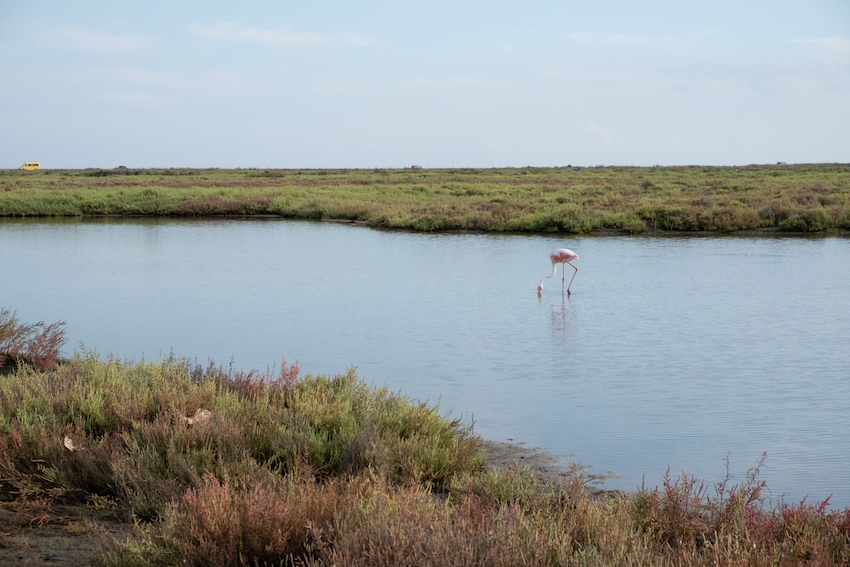 Where to se wild flamingos in Delta del Ebro, Spain - by Ben Holbrook from Driftwoodjournals.com