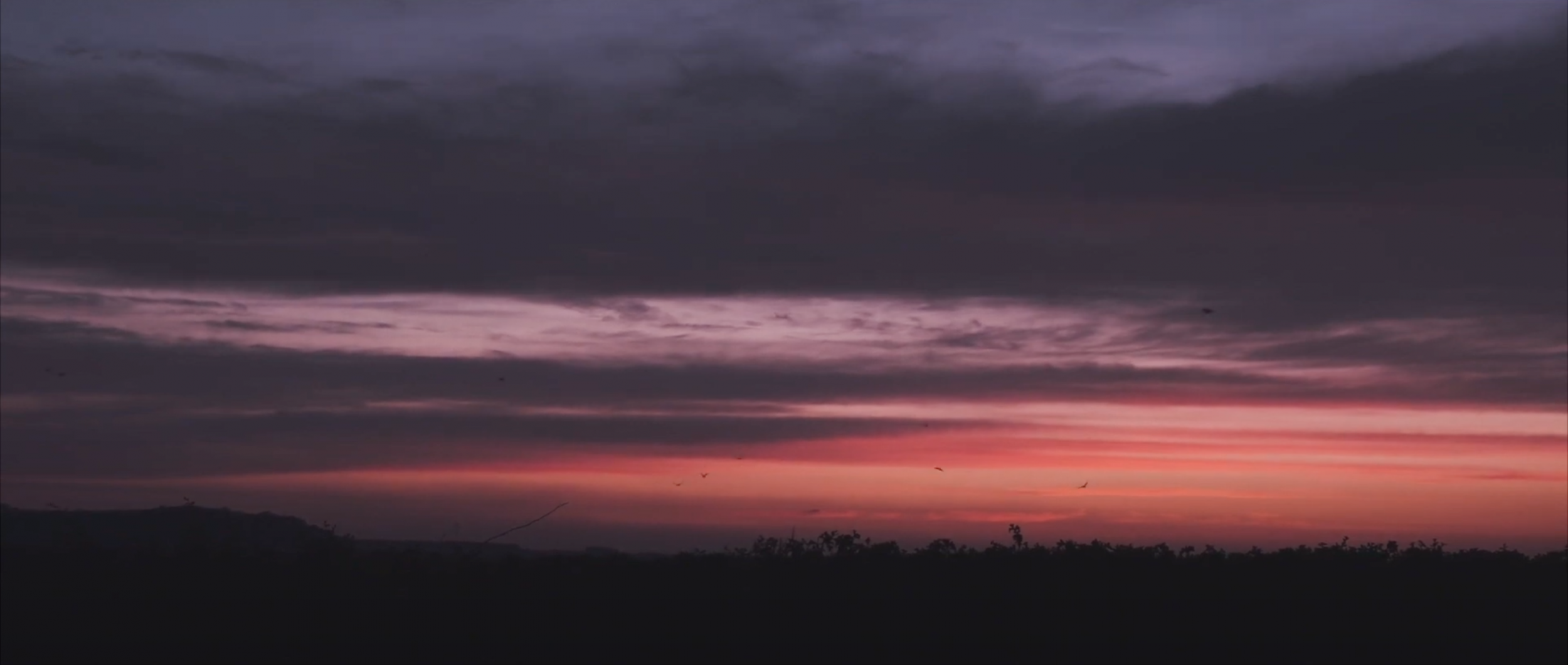 Surrender ~ A Coronavirus Short Film by Ben Holbrook Shot in South Wales, UK